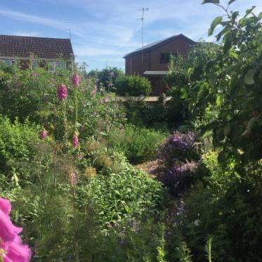 Sprachspinat.de | Permakultur-Gartenprojekt Wivenhoe - ein insektenfreundlicherkleiner Waldgarten mit Obstbäumchen, Obsträuchern, Kräutern, Gemüse und essbaren Blüten