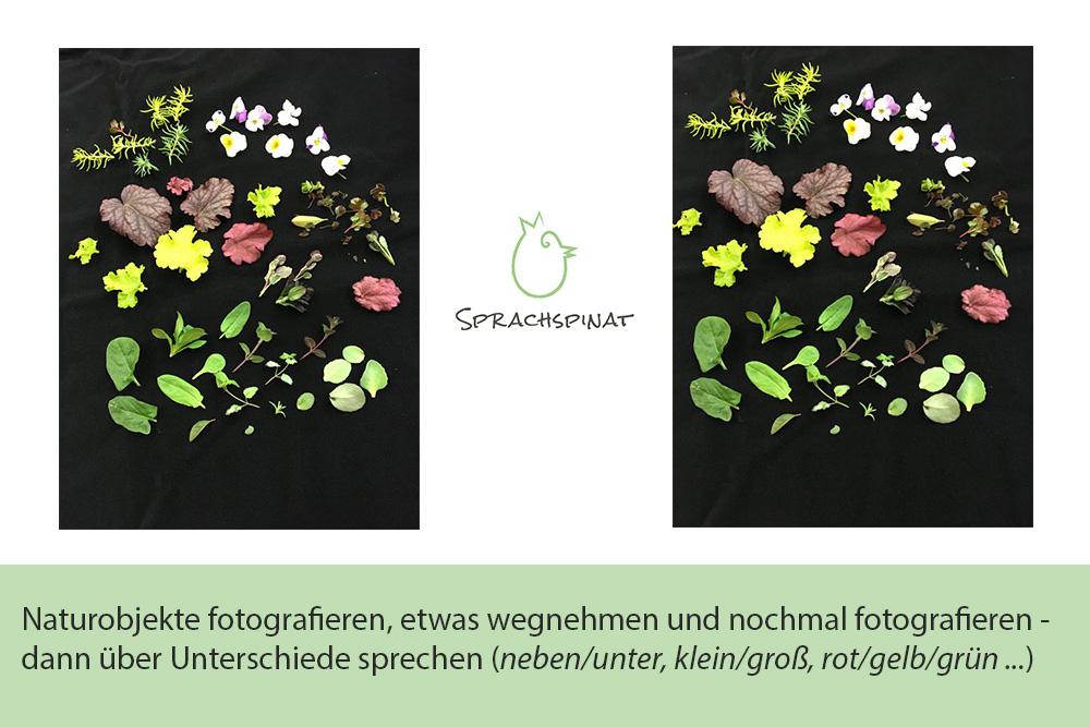 Abb.4: Sprachspinat-Sprachanlass Unterschiede in Pflanzenbildern finden