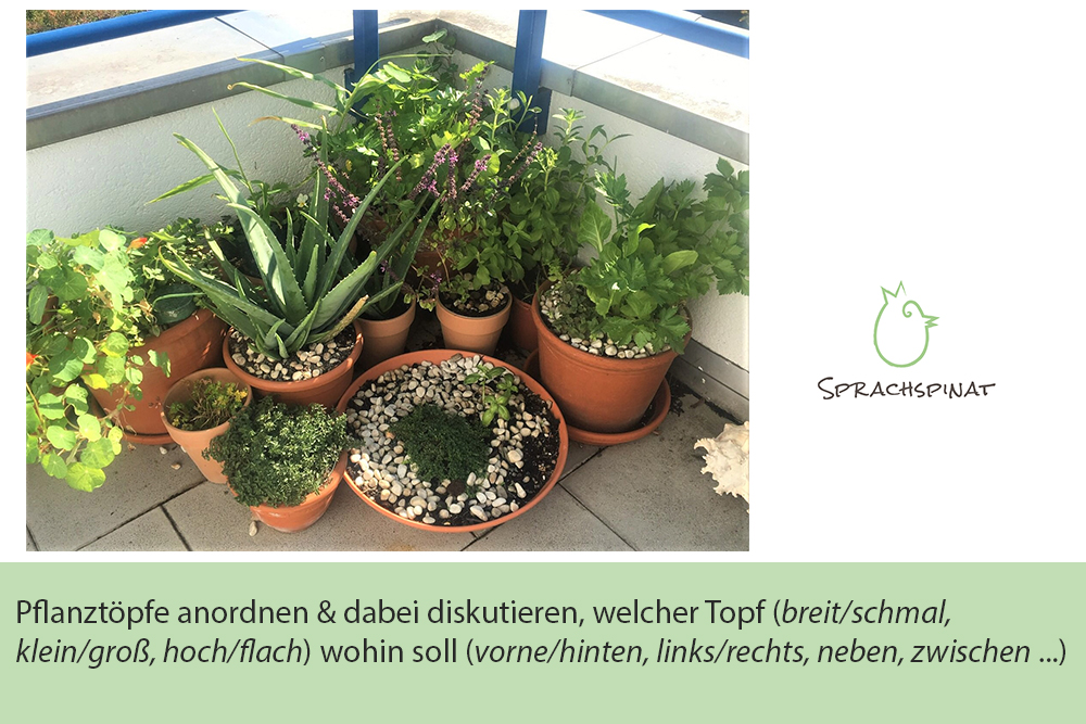 Abb.3: Sprachspinat-Sprachanlass Pflanztöpfe für den Balkon