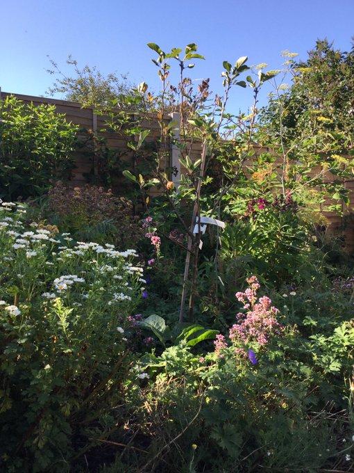 Ein insektenfreundlicher Waldgarten mit Obstbäumen, Beerensträuchern, Gemüse und Kräutern