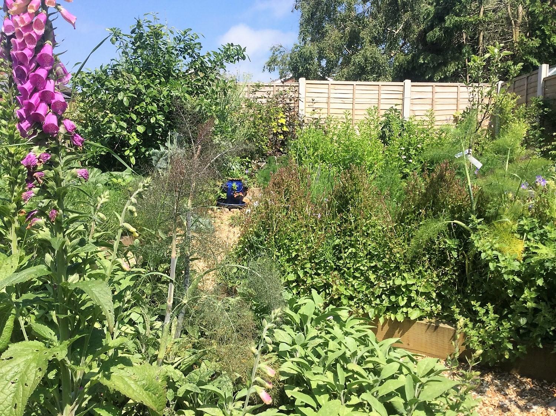 Permakultur-Waldgarten als Hausgarten mit Obstbäumchen, Beernsträuchern, Blatt- und Wurzelgemüsen, Erdbeeren und Kräutern