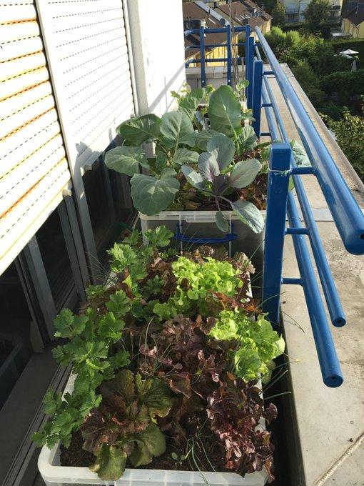 Permakultur auf dem Balkon: Pflanzkisten mit Mischkulturen und eingebautem Wurmturm