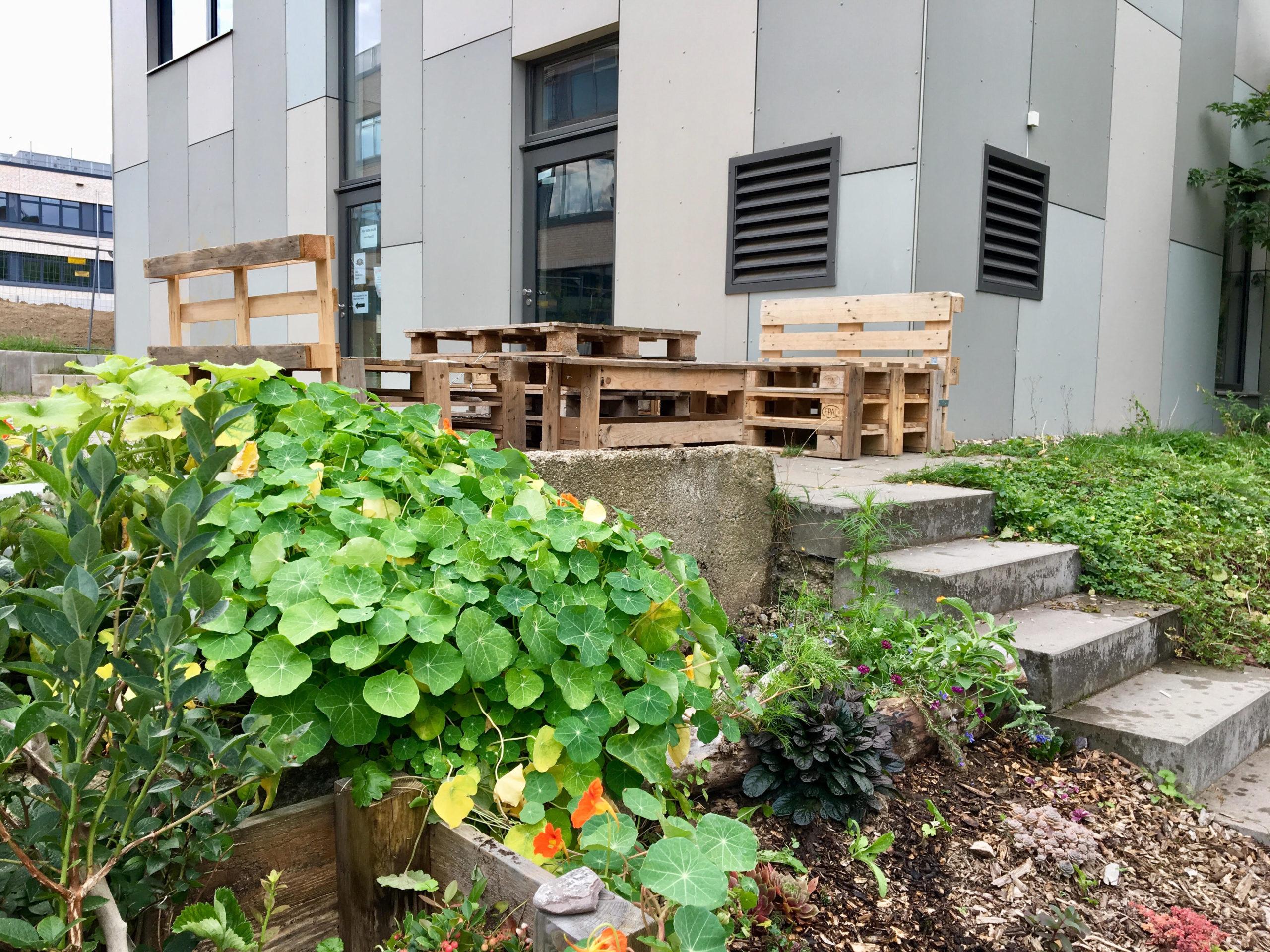 #meinessbaresKöln - Jugendzentrum Weiden: selbstgebaute Sitzgruppe und Hochbeete mit Kräutern, Beeren und anderen insektenfreundlichen Pflanzen