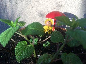 Suchspiel im Kräutergarten: Das Baby mit dem Schirm versteckt sich hinter der Zitronenmelisse