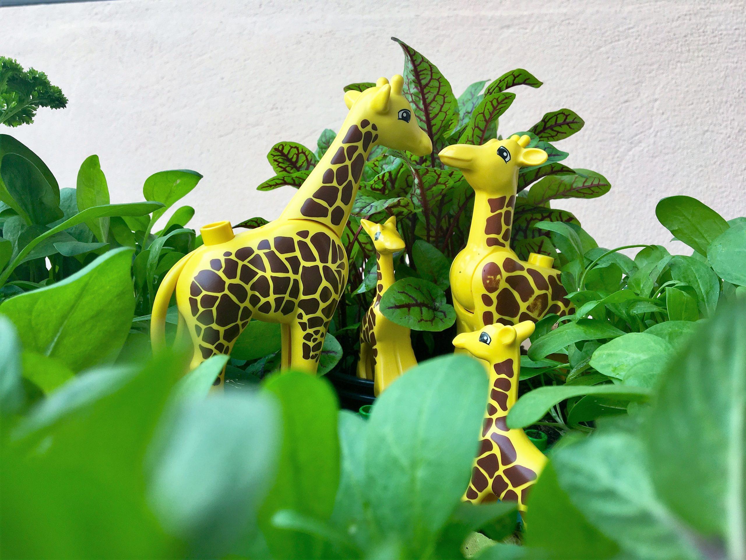 """Spielzeugtiere, Spinat und andere Pflanzen in der """"Wupf""""-Wurm-Pflanzenkiste des Sprachspinat-Gartens - für Sprachspiele zu """"groß und klein"""" und """"links und rechts"""""""