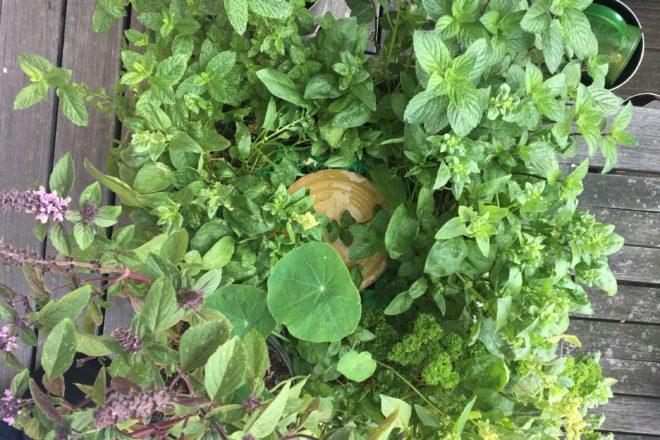 Die WUPF-Wurm-Pflanzen-Kiste - ein Teil des Sprachspinat-Gartens für Sprachbildung, Sprachförderung, Naturbildung und BNE, u.a. mit Strauchbasilikum und griechischem Basilikum