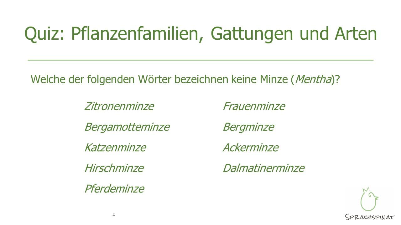 Minze-Quiz zur botanischen Taxonomie