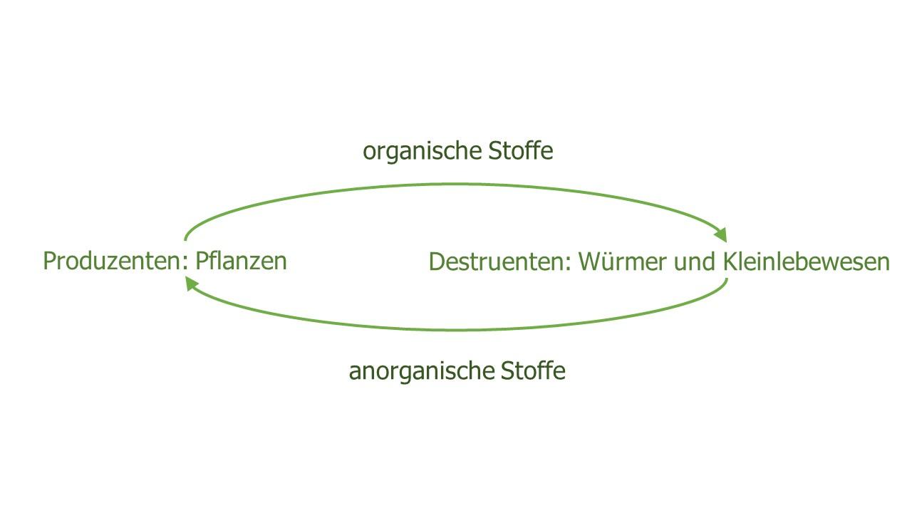 Der Material-Kreislauf in der WuPf-Wurm-Pflanzen-Kiste