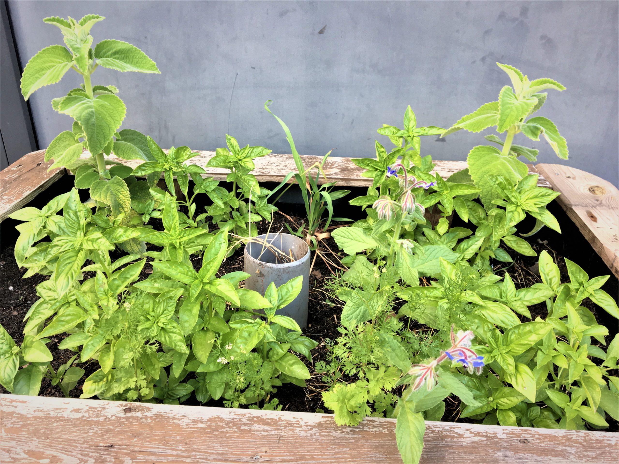 WuPf-Wurm-Pflanzenkiste als Hochbeet mit durchlöchertem Rohr als Wurmturm